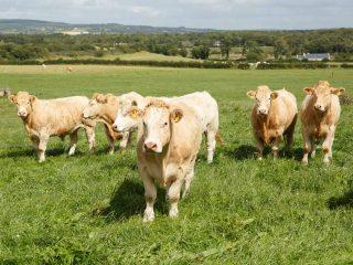 Negative Herd Status